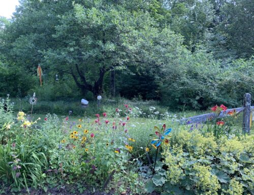 Spirited Events at the Forest Magic Healing Sanctuary